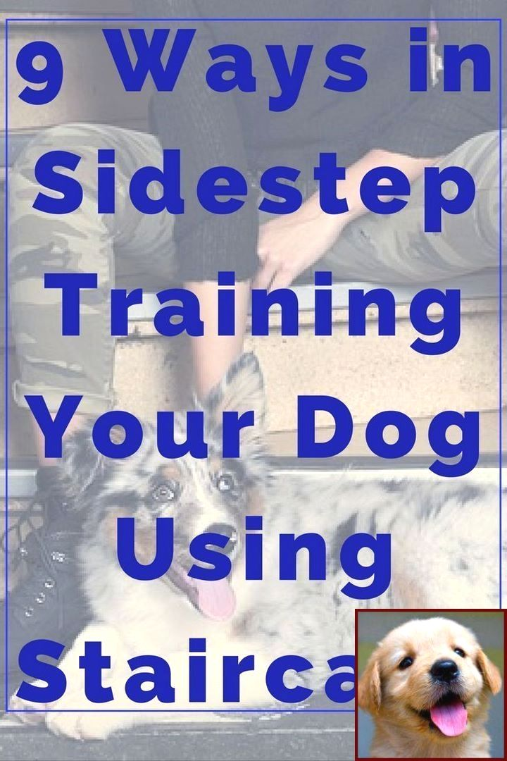 How To Get Your Puppy To Stop Biting Leash And How To Train Dog To