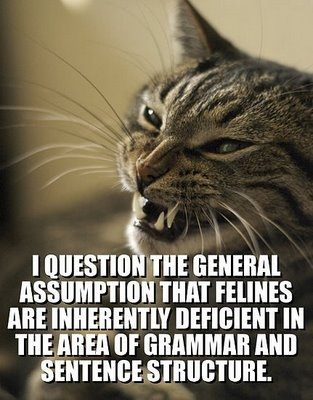 Not all kittehs haz cheezburgers.Cheeseburgers, Lol Cat, Funny Pictures, Funny Cat, Lolcats, Kitty, Grammar, Baby Talk, Cat Photos