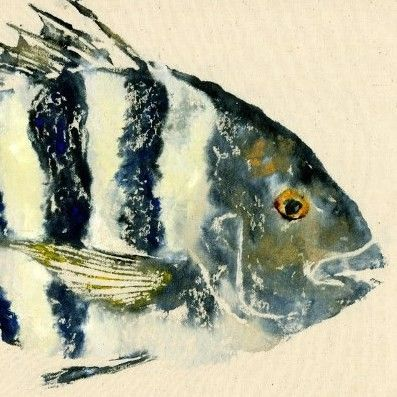 Sheepshead  Convict  Gyotaku Fish Rubbing  Limited by fredfisher, $55.00