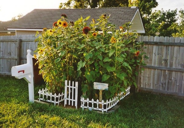 17 Best Images About Sunflower House On Pinterest