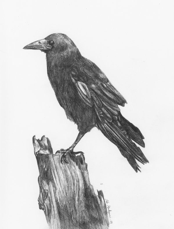 Crow by sheetah.deviantart.com on @DeviantArt