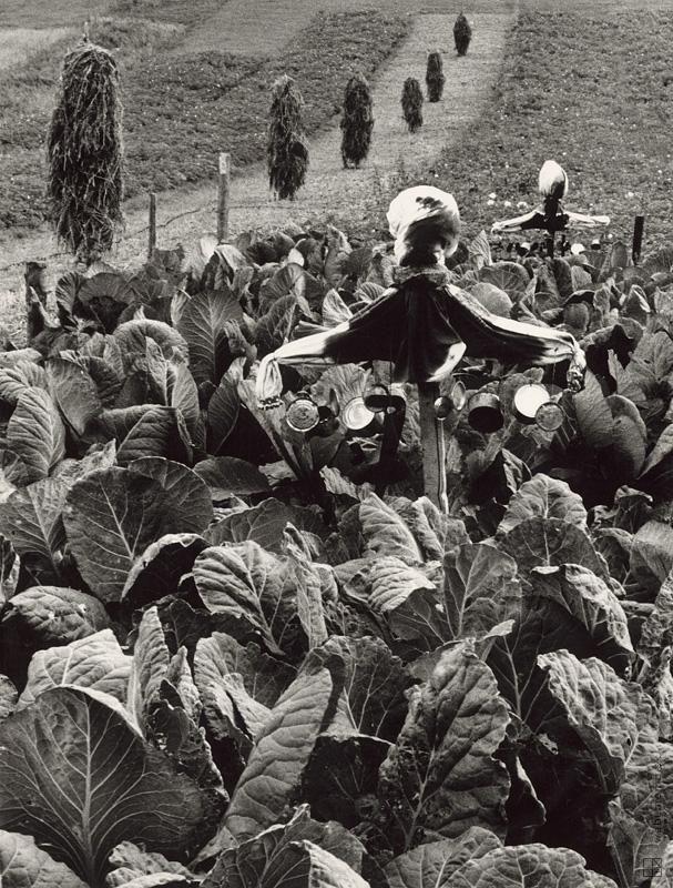 Martin Martinček: Kapustnisko:1963 - 1966