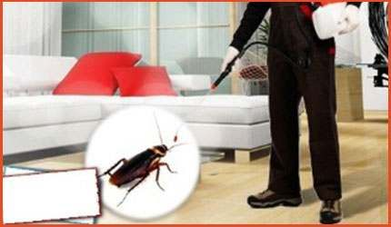 Niagara Extermination offers the best pest removal services in Niagara area. We offer our expertise in bed bug extermination, ants removal, flea extermination, cockroach extermination, centipede & moth extermination, bees & wasp removal, spider removal, mice & rat removal, flies extermination, hornet removal and many more.