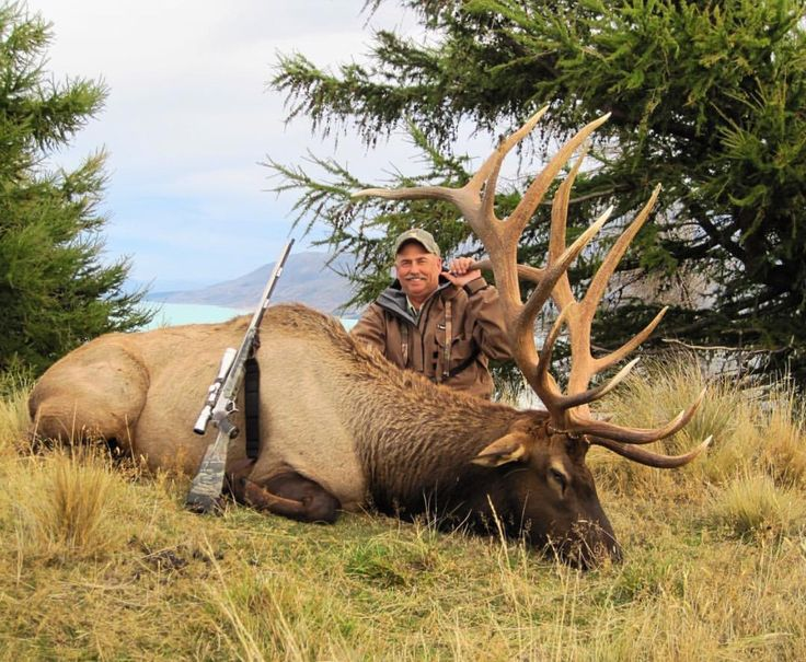 Central Coast Outfitters, LLC in Santa Maria, California offers Tule Elk, Black Tail Deer, Black Bear, Wild Boar, Bobcat, Quail, and Turkey hunts! They also offer hunts in New Zealand! Check them out & Book your hunt today!! #DreamSportingTrips