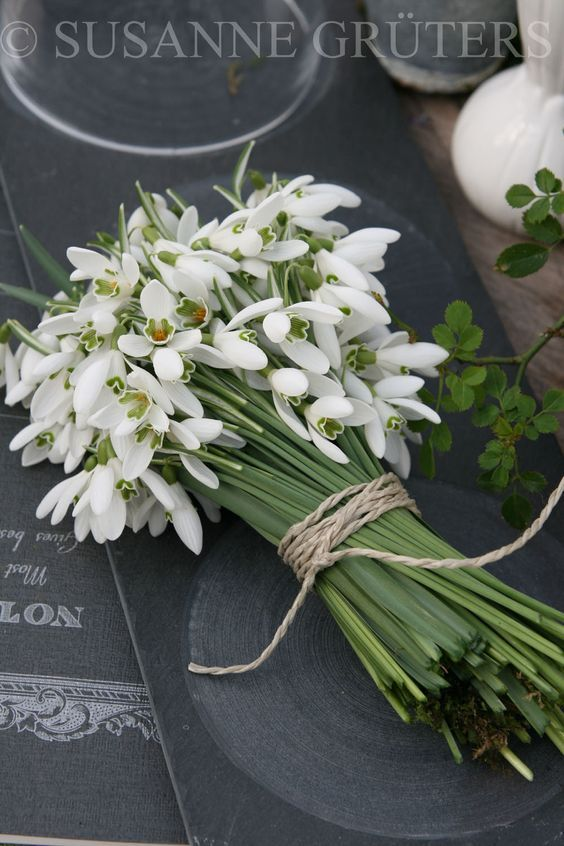 50 Best Snowdrops Images On Pinterest Paper Flowers