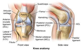Ligament Injuries to the Knee What are knee ligaments? There are 4 major ligaments in the knee. Ligaments are elastic bands of tissue that connect bones to each other and provide stability and strength to the joint. The four main ligaments in the knee connect the femur (thighbone) to the tibia (shin bone), and include the following: Anterior cruciate ligament (ACL). The ligament, located in the center of the knee, that controls rotation and forward movement of the tibia (shin bone)…