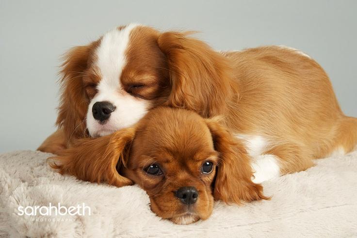 75 best animal love im...