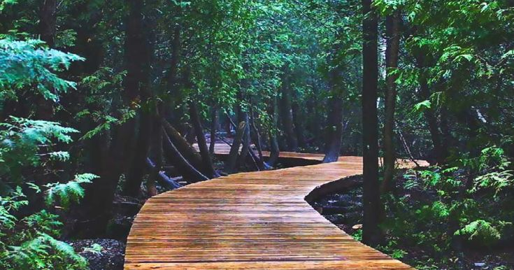 Cyprus Lake Trail, Bruce Peninsula,  This 5-km Boardwalk Trail Takes You Through An Ancient Forest In Ontario