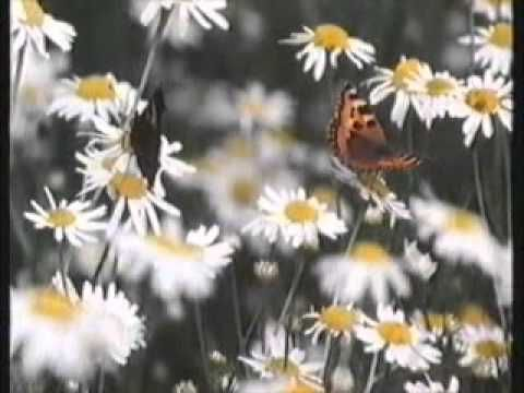 *▶ Vlinders bij Klokhuis 12 feb 1994