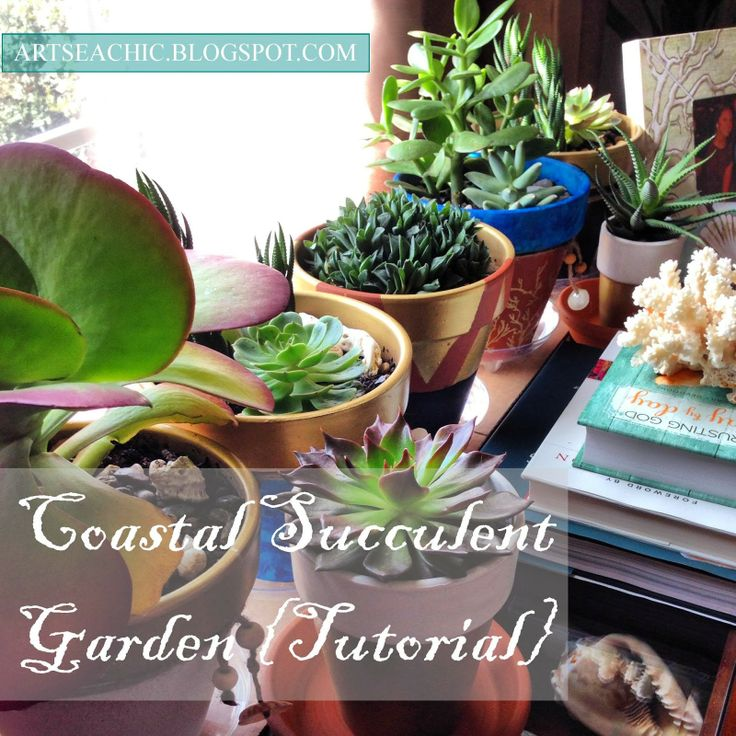{BLOGGED}: Coastal Succulent Garden Tutorial