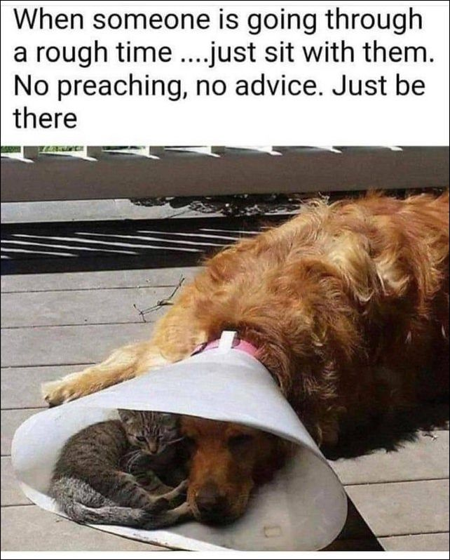 10 Funny Memes That Will Make Your Day Rough Times Dog Quotes Love Dog Quotes