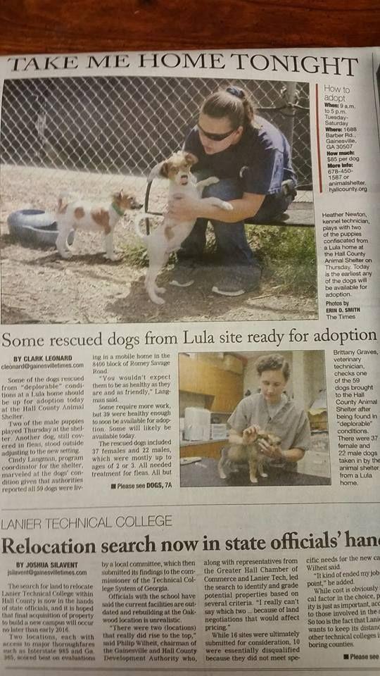 URGENT MED/LARGE BREEDS Urgent Dogs of Miami Facebook