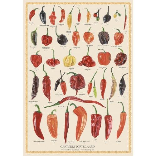Koustrup & Co. plakat med chili