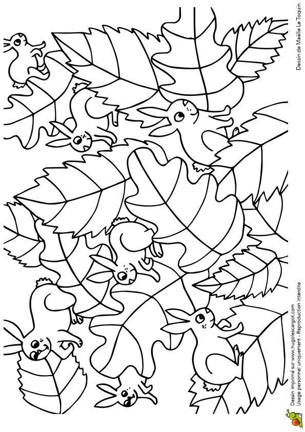 cache cache feuilles lapins