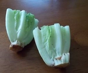 Regrow your lettuce - Leave and inch of leaves on bottom of heads of Romaine. Place in water until roots begin to grow. Then plant in container and pick every couple of days as lettuce regrows to keep it growing