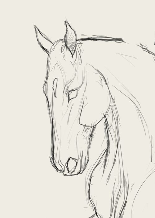 How to draw horse faces