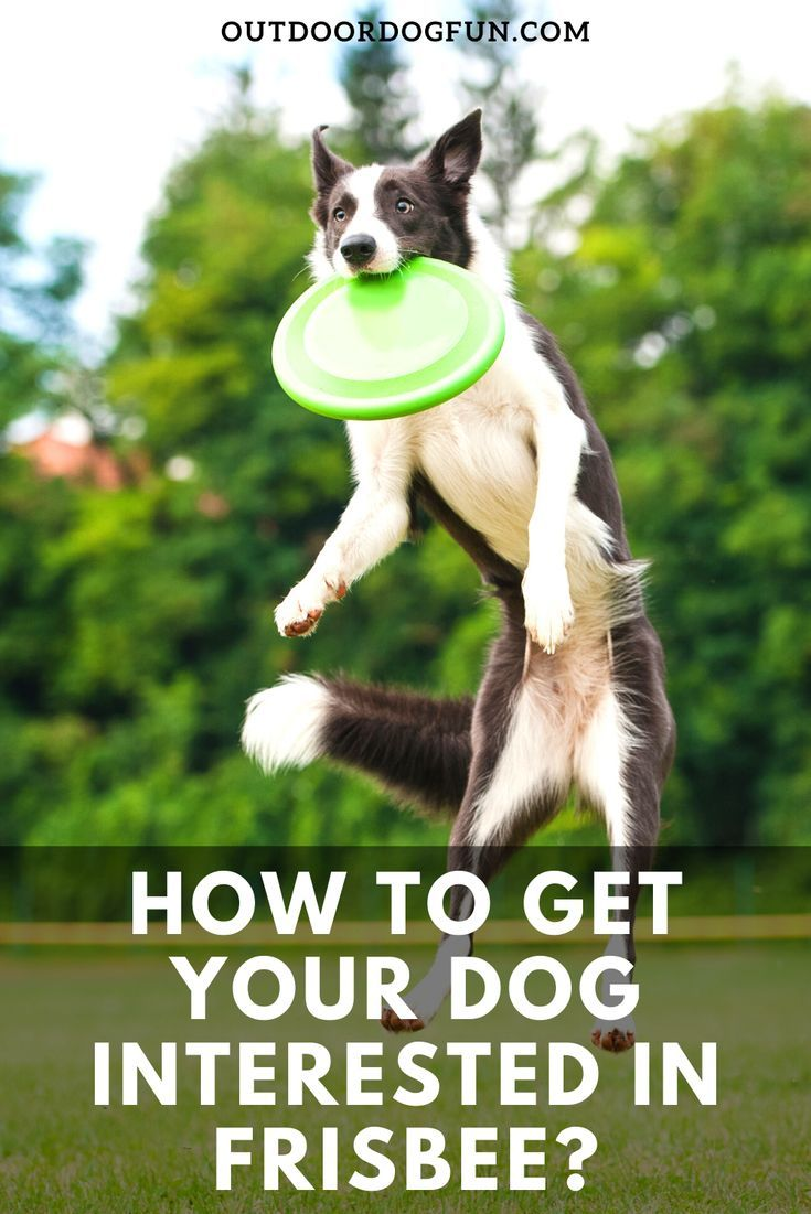 How To Train Your Dog To Stay Out Of The Garden And Pics Of Basic
