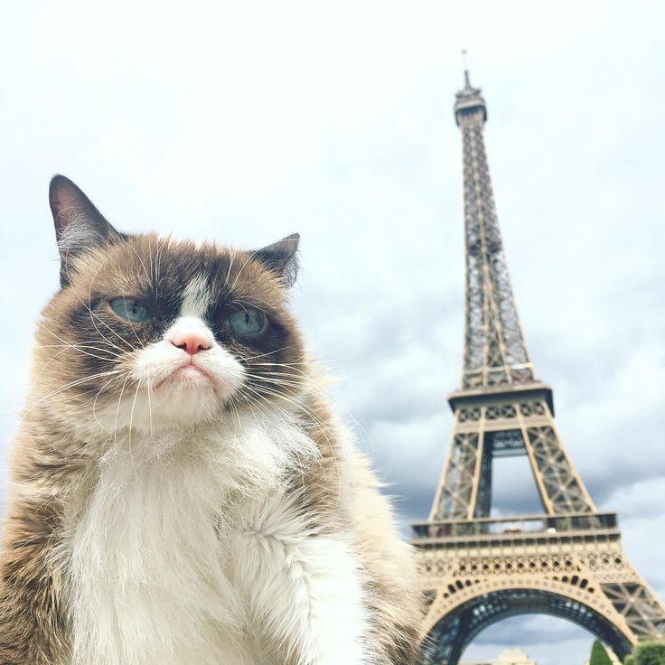 80 best grumpy cat