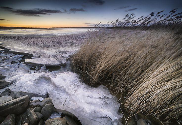 #spring #reeds #snow #ice #scene by Leena holmström
