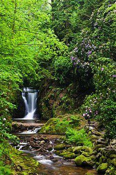 Die Geroldsauer Wasserwälle liegen nur 7km entfernt vom Hotel. Der Weg entlang der Wasserfälle ist einfach, berauschend ist die Rhododendronblüte im Mai und Juni. Am Anfang der Wasserfälle angekommen liegt der Bütthof, eine urige Waldgaststätte. http://www.hotel-am-sophienpark.de/   Spring at the Geroldsauer Waterfall - Black Forest, Germany