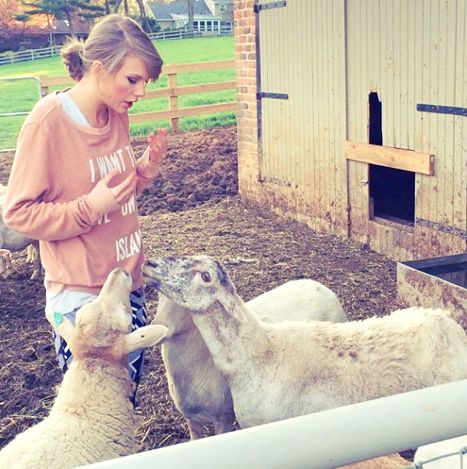Taylor Swift Tries Reasoning With Sheep, Realizes They Are Rude: Video - Us Weekly