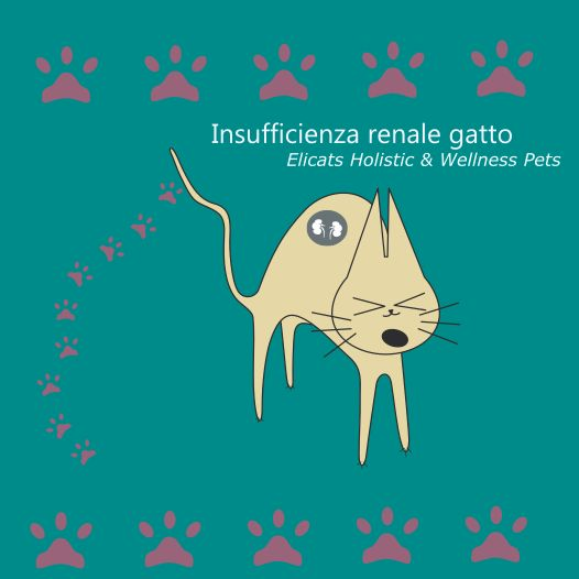 Insufficienza renale gatto, i sintomi e le terapie naturali, l'alimentazione, quando il gatto non mangia e vomita l'aspettativa di vita, gli stadi dell'insufficienza renale gatto