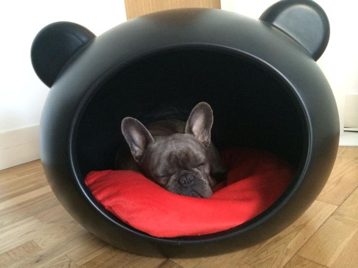 Vintage Wooden Chairs >> French bulldog called Eddie in one of our Guisapet Dog ...