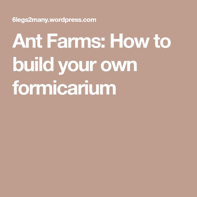Ant Farms: How to build your own formicarium