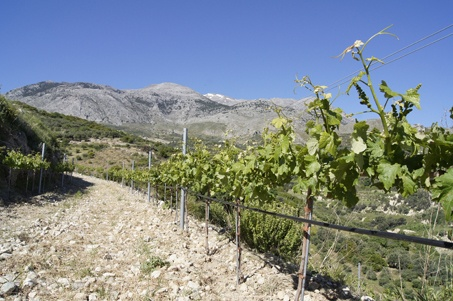 Diamantakis Winery op Kreta.