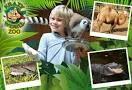 krazy world zoo algarve - Pesquisa Google