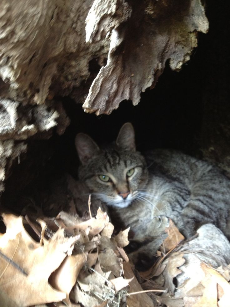At first, Remy lived under the cutting deck of Ryan's lawn tractor.  Then he moved into the base of an old oak tree.  His last move was into our hearts and into our home.
