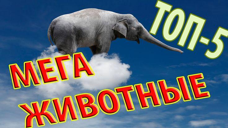Самые Большие животные в МИРЕ (ТОП5) Самое Интересное САМЫЕ САМЫЕ Большие животные на земле