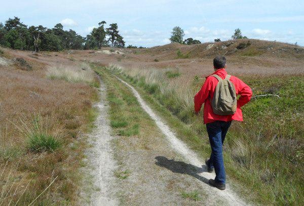 Eindeloos wandelen op de Veluwe