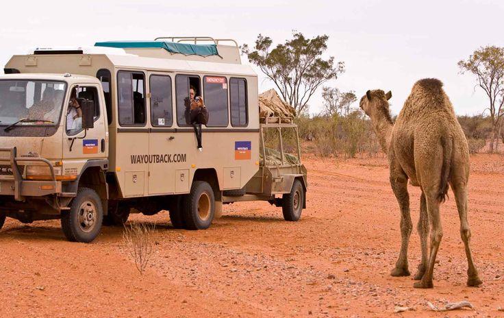 Uluru (Ayers Rock) and Red Centre Tours | Wayoutback Australian Safaris