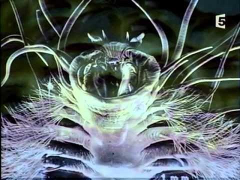 Aux Frontières De La Sciences - Aux Confins De L'univers - YouTube