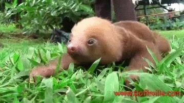 Zootopia Sloth Clip Funny Gif #1341 - Funny Sloth Gifs| Funny Gifs| Sloth Gifs