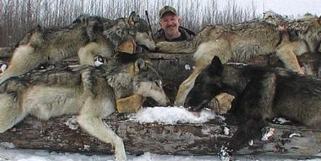 kayano 21 liteshow UNTIL MONTANA CALLS OFF STATE SANCTIONED WOLF HUNTS  WITHHOLD YOUR TOURISM DOLLARS FROM MONTANA    Please SIGN and share petition  Thanks