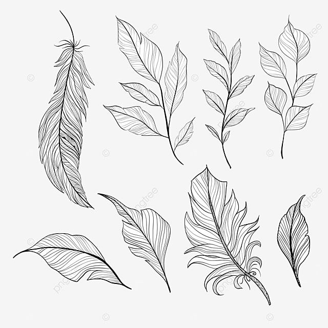 Set Of Beautiful Handdrawn Feathers Handdrawn Feathers Draw Png Transparent Clipart Image And Psd File For Free Download In 2021 How To Draw Hands Clipart Images Cartoon Clouds