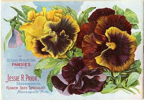 The front cover of Jessie Prior's 1904 seed catalog featuring her St. Louis World's Fair pansies in all their colorful glory.