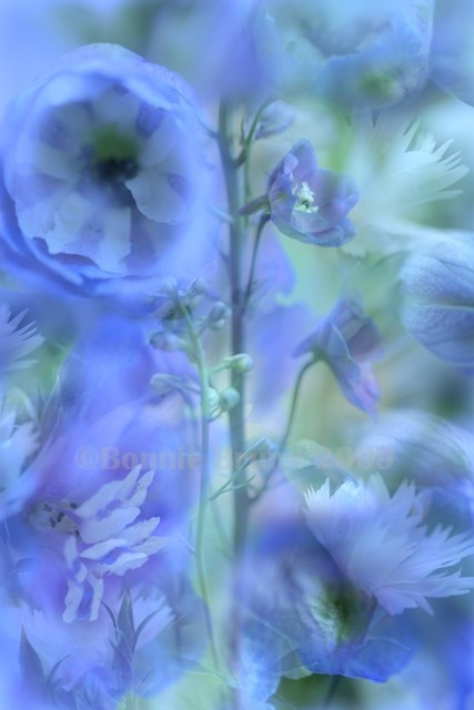 176 Best Periwinkle French Blue Inspiration Images On