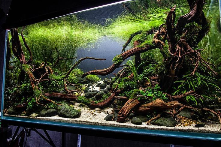 17 Best Images About For The Fish On Pinterest African Cichlids Aquarium Stand And Cichlids