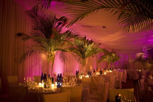 RatPack_palms1.jpg by Notes On A Party, via Flickr                                                                                                                                                     More