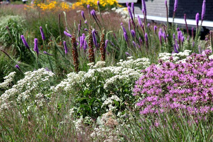 40 best images about gardens piet oudolf on pinterest for Piet oudolf plant list