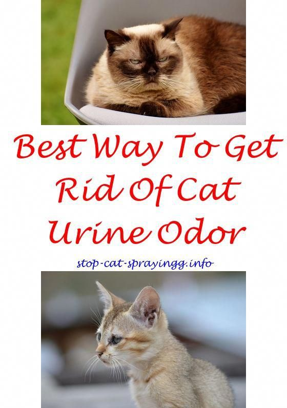 Outdoor Cat Repellent Spray Reviews For Cats To Stop Scratching Waterless Shampoo How Spraying
