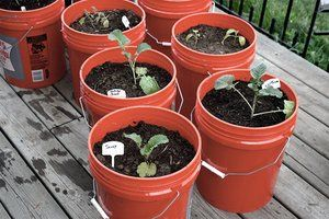 Container Gardening: Pros and Cons of growing specific vegetables! Really simple to understand! Love it!!