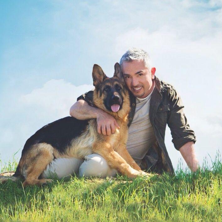 How to train a german shepherd cesar millan