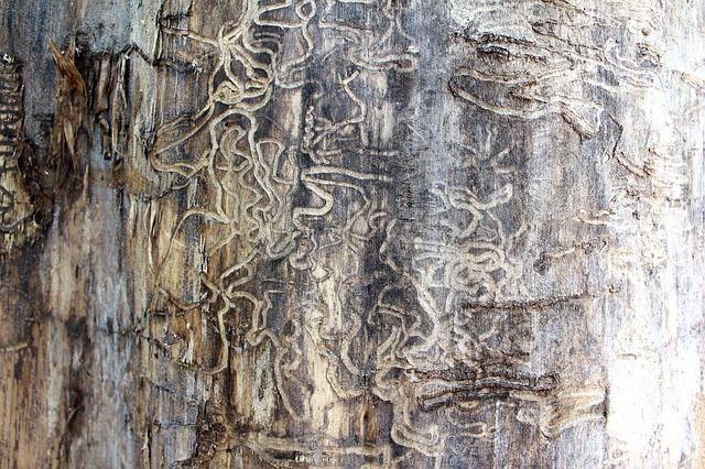 termite control, DIY termite bait, termite baiting