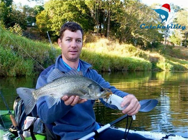 Check out this beautiful Australian Bass from one of our top users - Scott Cooper from Electric Sports Fishing.  http://www.catchability.com/