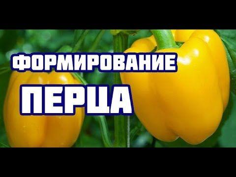 Учимся формировать томаты, перцы, огурцы. - YouTube