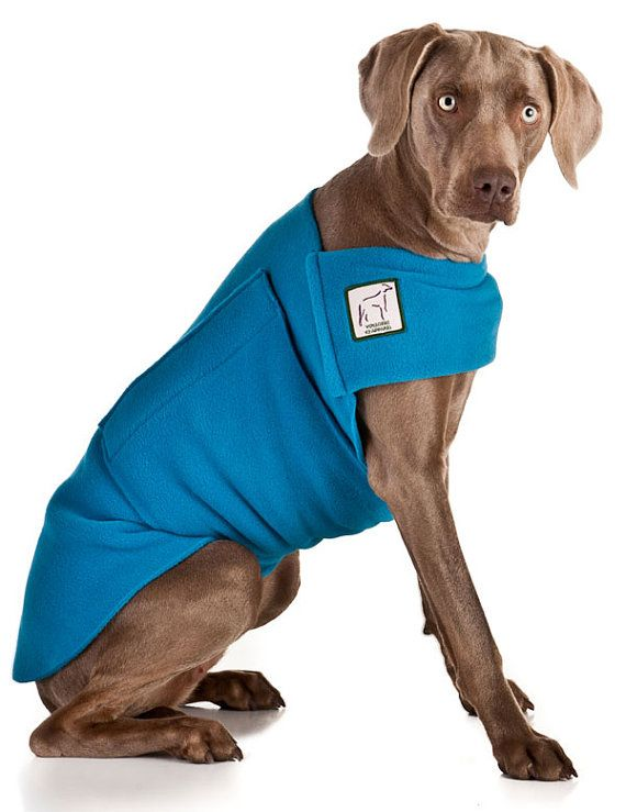 WEIMARANER Tummy Warmer by VoyagersK9Apparel on Etsy, $36.00